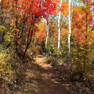 singletrack-trails-mormon-pioneer-14.jpg