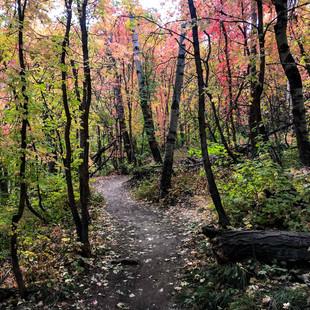singletrack-trails-mormon-pioneer-13.jpg