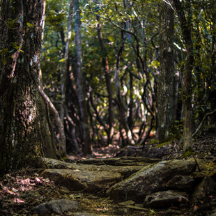 singletrack-trail-middle-black-mountain-22.jpg