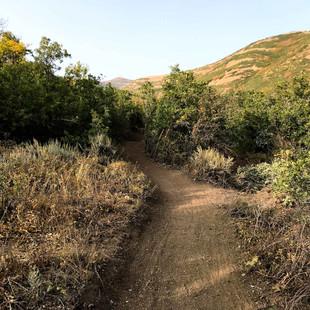 singletrack-trails-mormon-pioneer-12.jpg