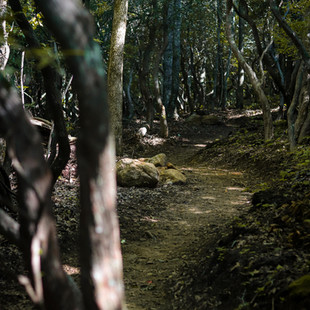 singletrack-trail-middle-black-mountain-23.jpg
