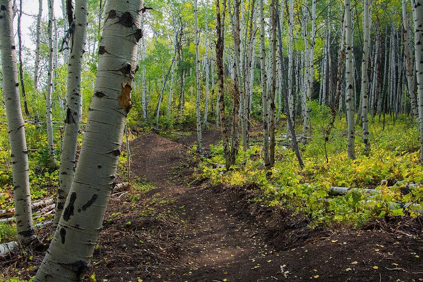 singletrack-trails-prospector-powderhorn.jpeg