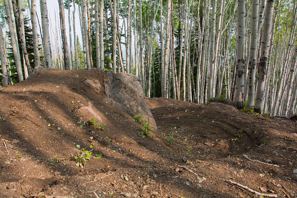 mountain bike jump lined with berms and aspen trees
