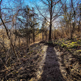 singletrack-trails-handcut-hollow-20.jpg
