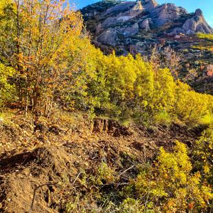 singletrack-trails-mormon-pioneer-10.jpg