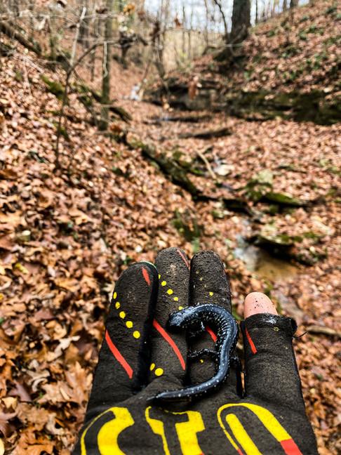 singletrack-trails-handcut-hollow-3.jpg