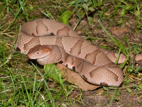Venomous Snakes: Tips to Avoid Being Bitten