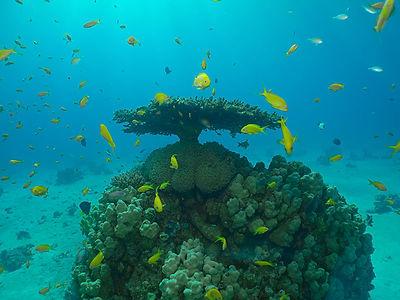קורס צילום תת ימי