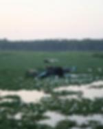 De-weeding machine a Bellandur Lake