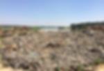 Loads of garbage at Bellanur Lake