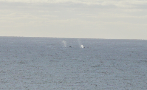 See Whales from your Lanai