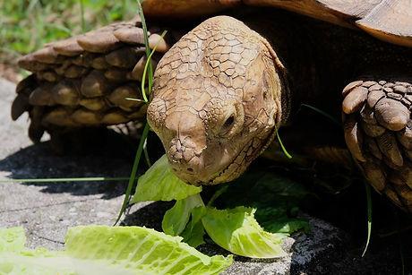 tortoise_edited.jpg
