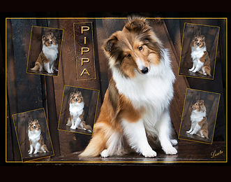 Pet Pictures