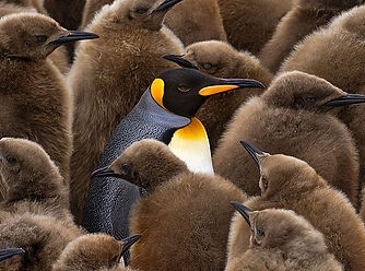 PenguinHuddle.jpg