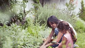 Se préparer pour partir à la cueillette de plantes - Etapes par étapes.