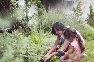 Botany & Organic Food Literacy