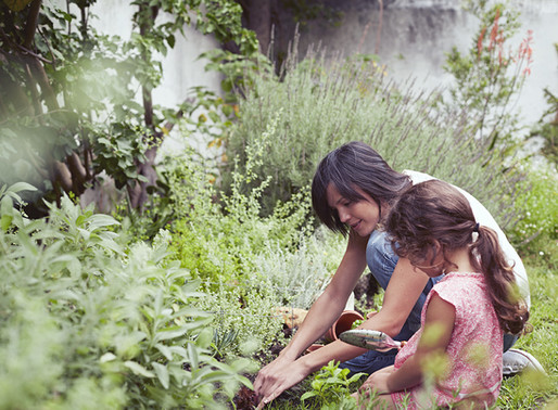 3 Herbs for Kids You Are Probably Already Growing In Your Garden