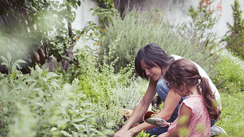 Online Medicine Gardening Mentorship