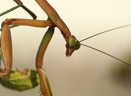 CONVERSATION WITH A MANTIS