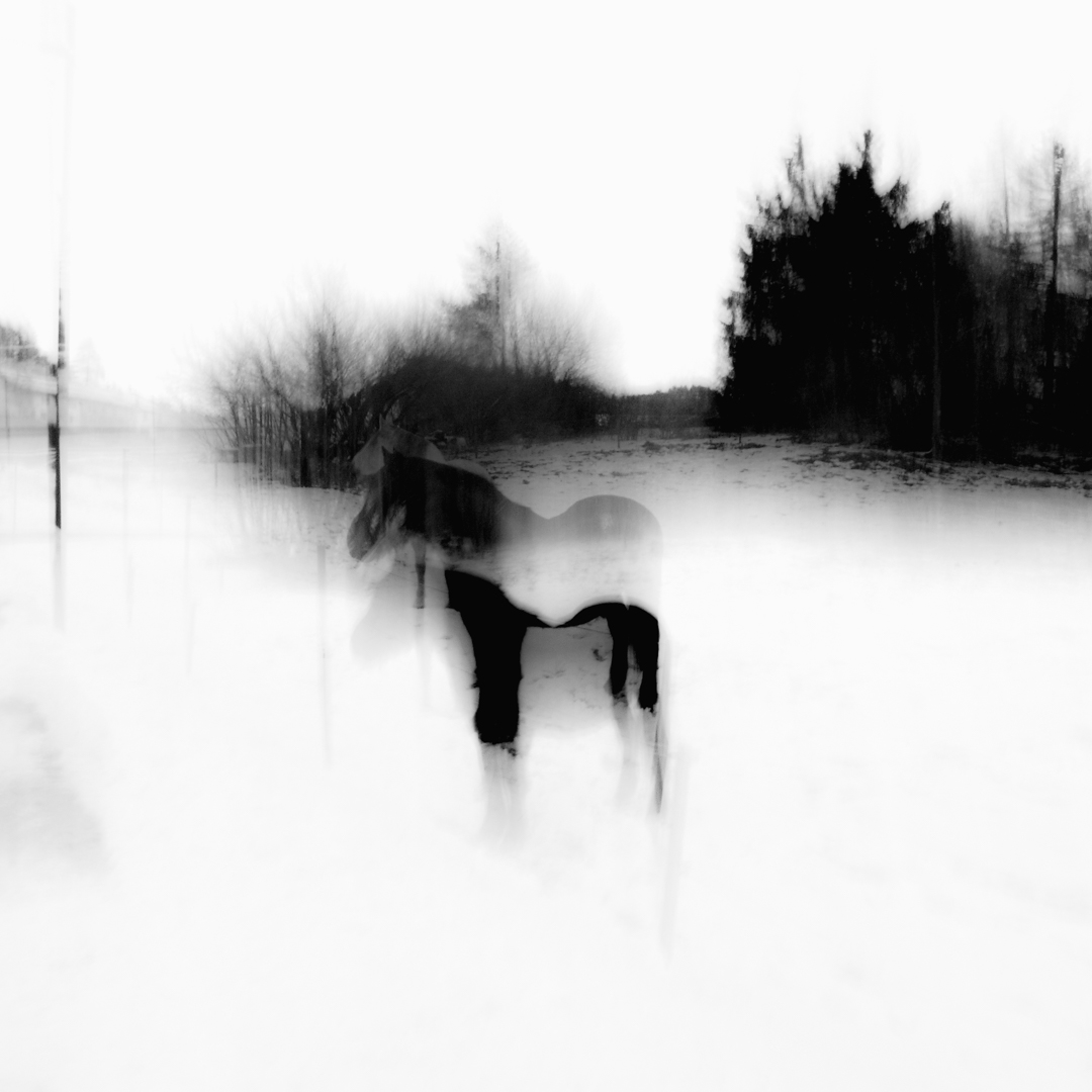 Black Horse In A Wintry Landscape