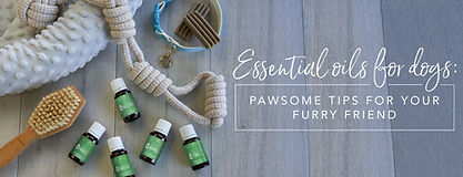 blog-Essential-oils-for-dogs-Pawsome-tip
