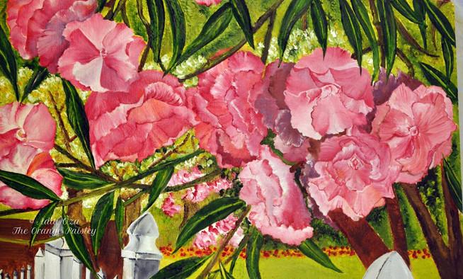 Oleander Closeup.jpg