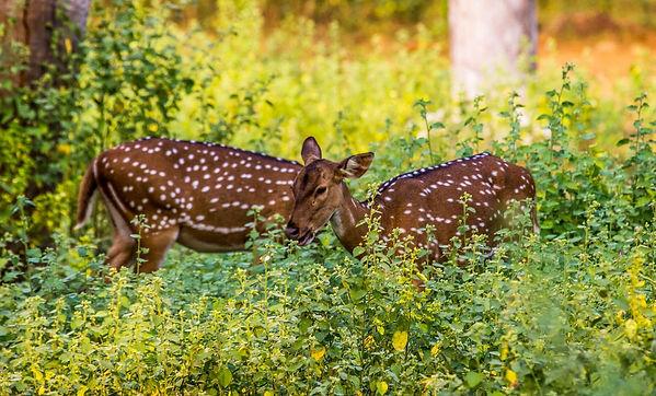 Vandaloor-Zoo-Chennai.jpg