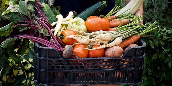 Crate of root and vine veggies
