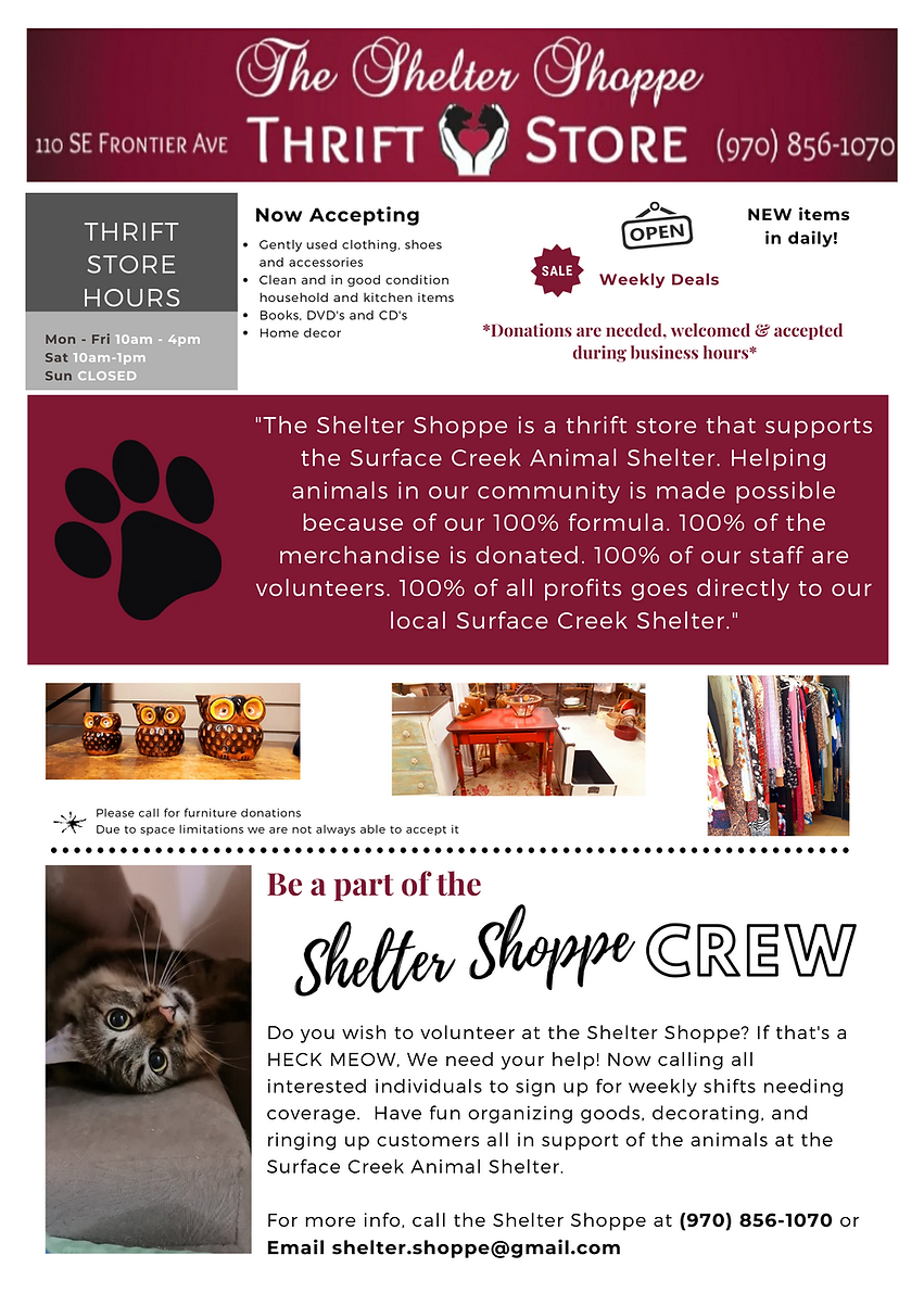 _Cat's Meow Newsletter Template.png