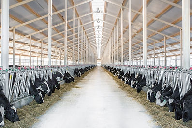 Освещение коровников, светодиодные светильники для коровников, светильники для сельского хозяйства, защищённые светильники, светильники для животноводства