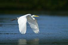 Heron-web.jpg