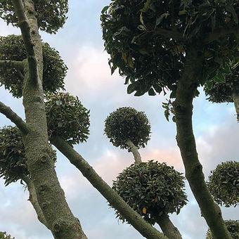 creative pruning.jpg