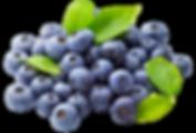 fruits005.png