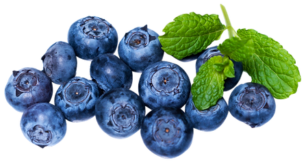 Fresh-Blueberry-PNG-image-500x266.png