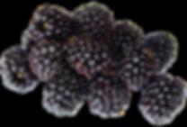 Blackberry-Fruit-PNG-image-500x339.png