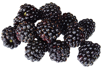 Blackberry-Fruit-PNG-image-500x339.png
