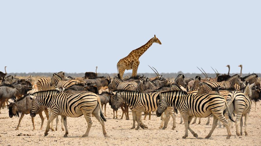Namibia_Waterhole2.jpg