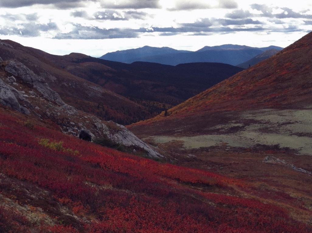 Fall colors in The Yukon