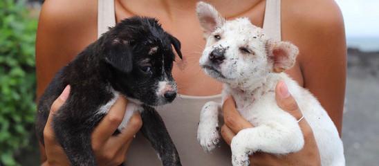 Balis Big Problem With Plastic & Puppies