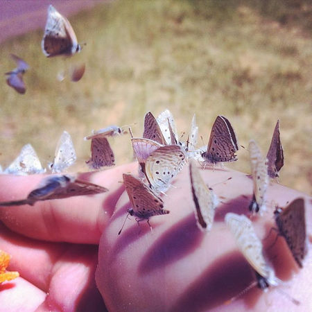 8th pic butterflies.JPG