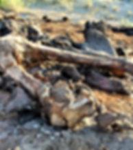 Elephant bone.jpg