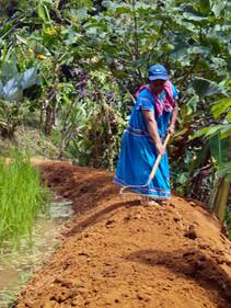 Wetland Rice Paddy Construction