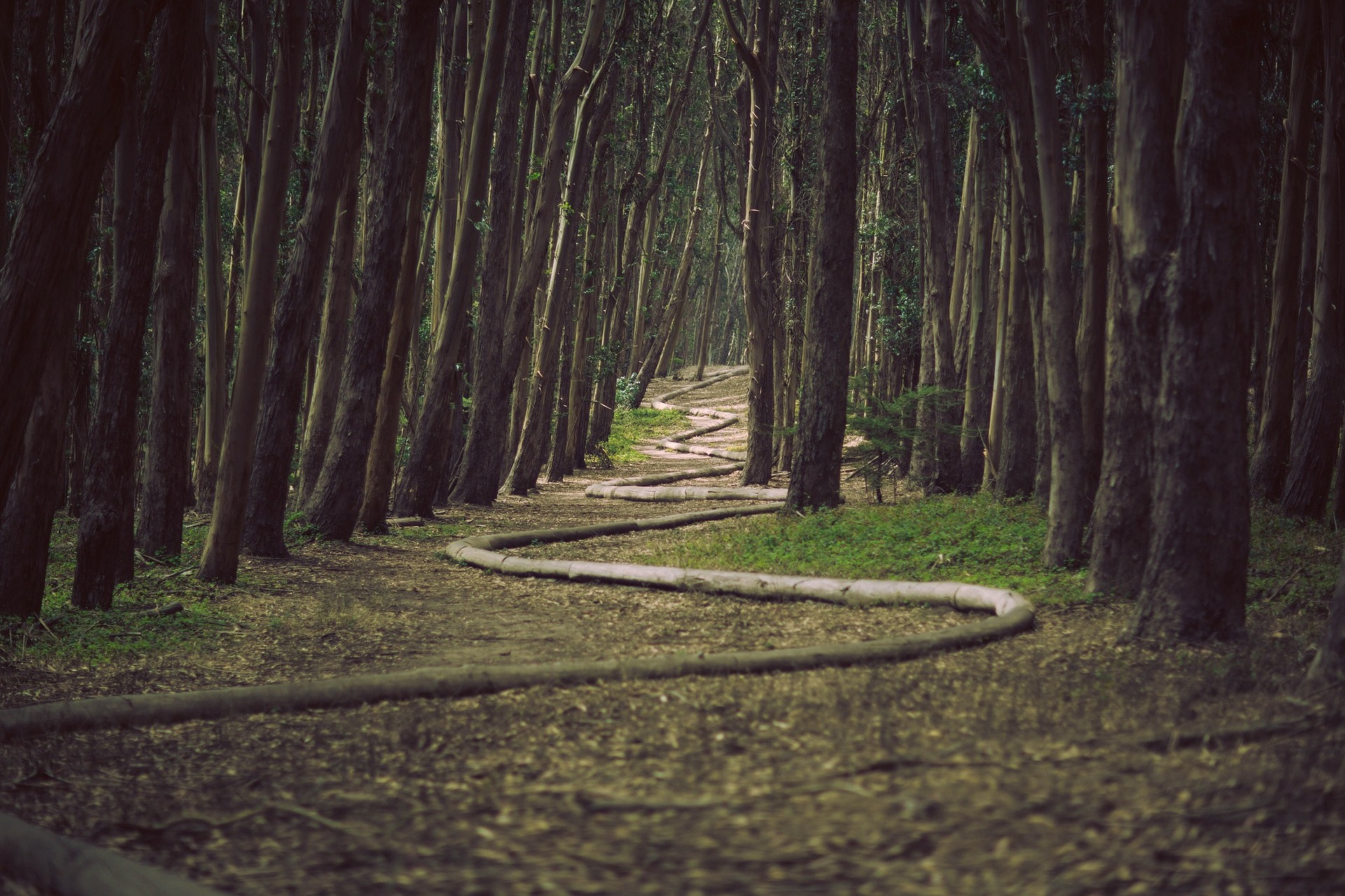 forest-336496_1920.jpg