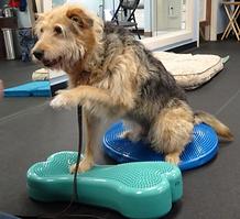 Dog balancingon odd surfaces