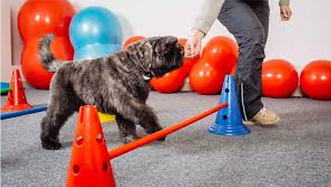 Dog doing obstacle course