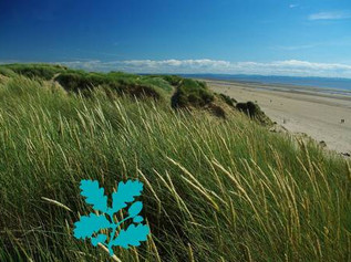 Cleaning National Trust Formby Beach