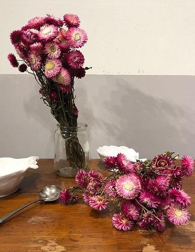 Jardin - Mazzo fiori essiccati fuxia
