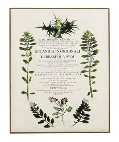Quadri Blanc - Quadro Botanica cm. 40x50