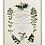 Thumbnail: Quadri Blanc - Quadro Botanica cm. 40x50