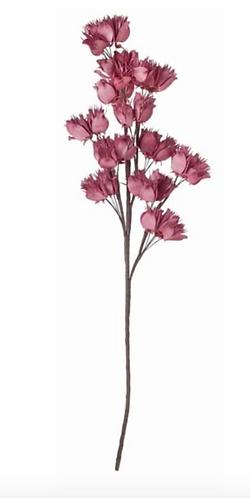 Hydrangea - Ramage